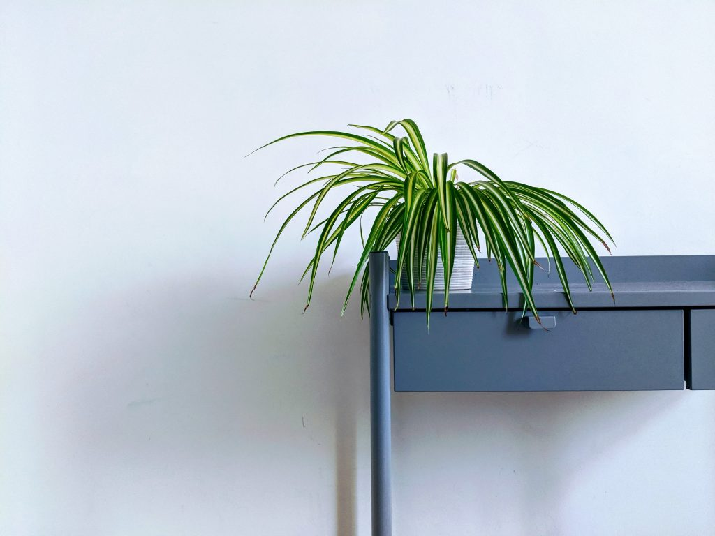 Green long plant on white pot on top of grey table in white background