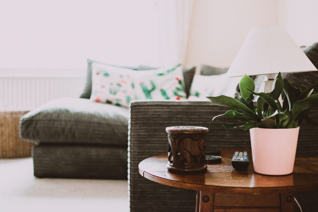 green plant in white pot in a condo living room with grey couch