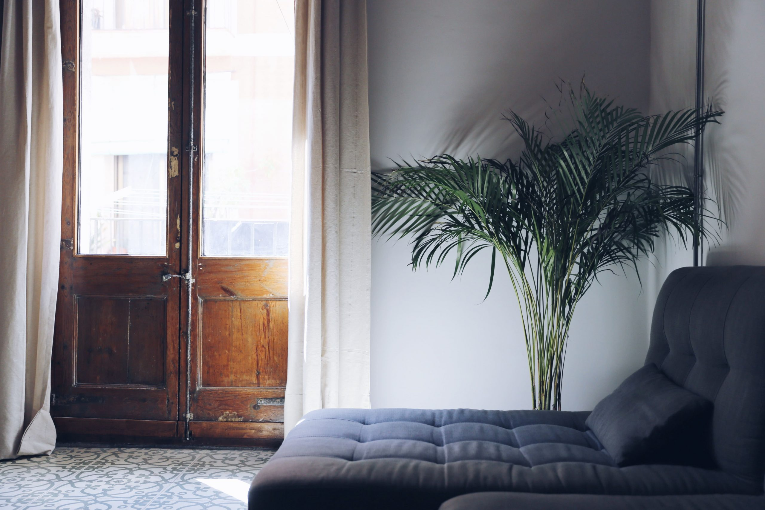 Indoor Plant for your Condo Unit